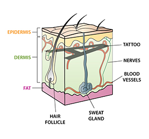 tattoo cross section